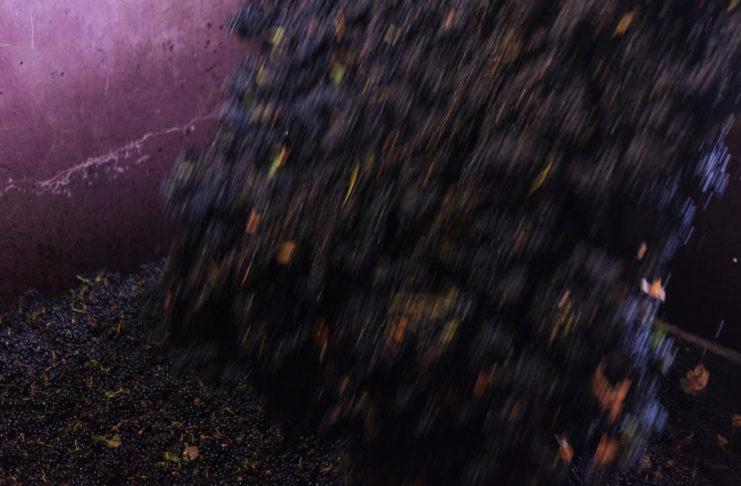calidad de la uva