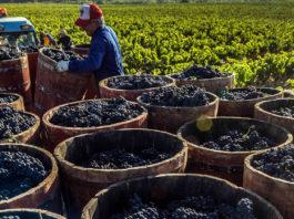 Controles vino de Rioja