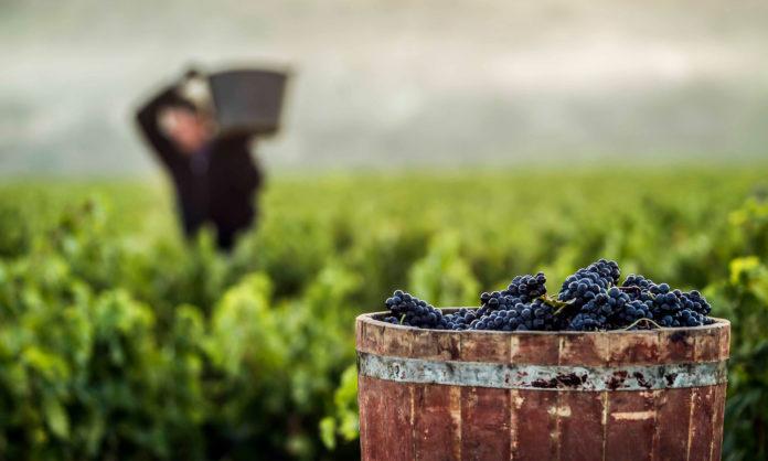 vendimia 2018 en Rioja