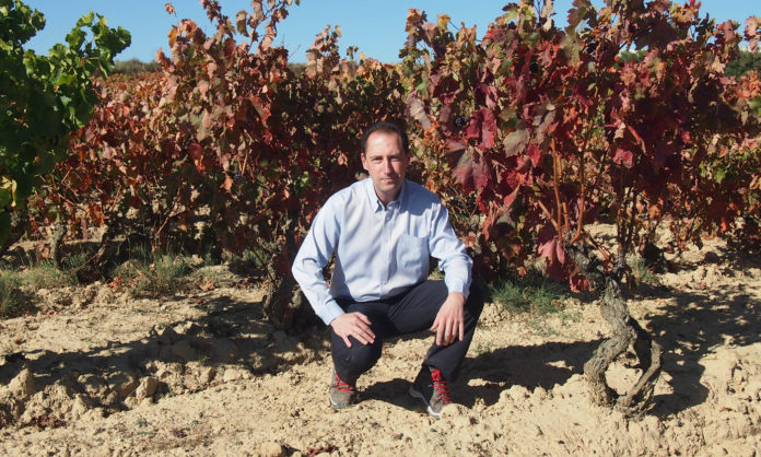 Bodegas Torres en Rioja