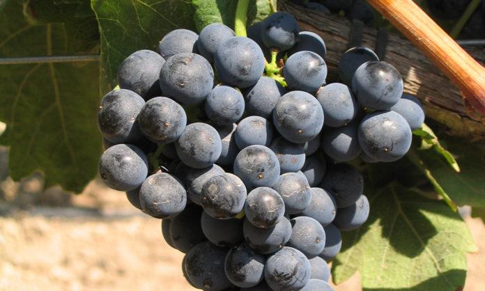 cambio climático Rioja