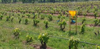 Los vinos biodinámicos