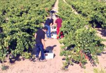 el mejor clima para el mundo del vino