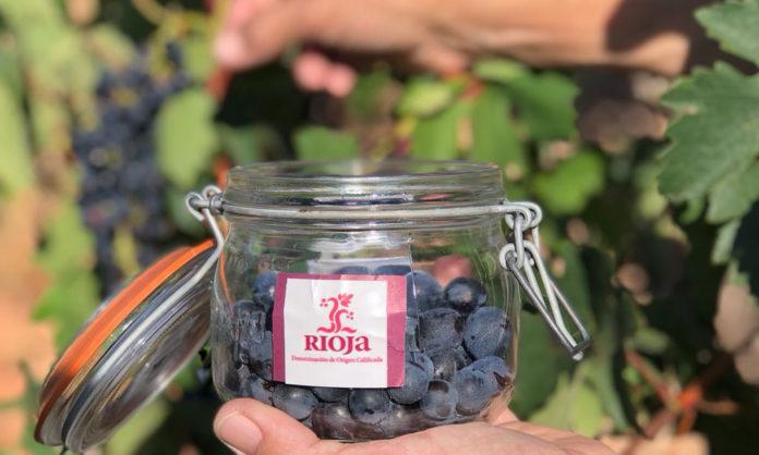 Vendimia en Rioja