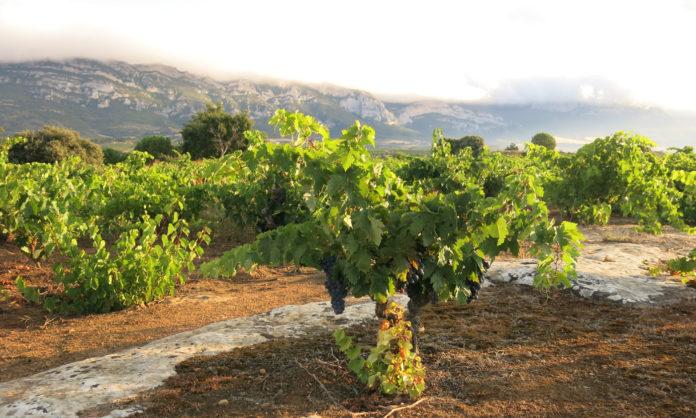 Viñedos Singulares en Rioja