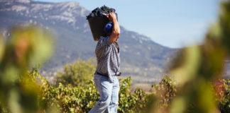 vendimia 2019 en Rioja