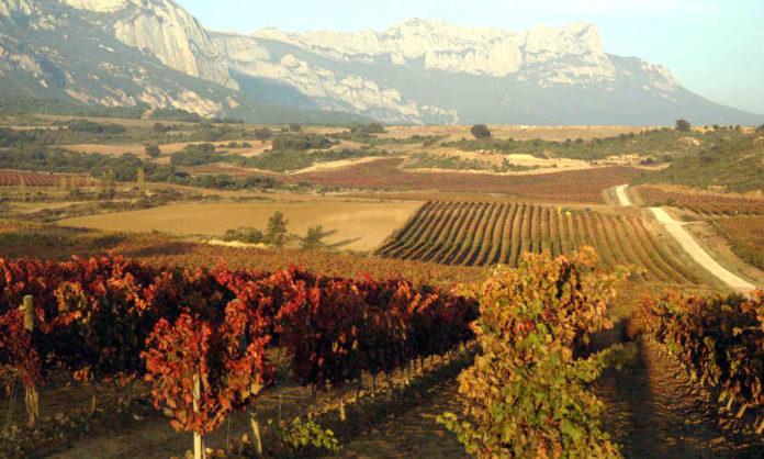 Rioja Viñedos de Álava