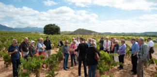 Premios de Enoturismo 'Rutas del Vino de España'