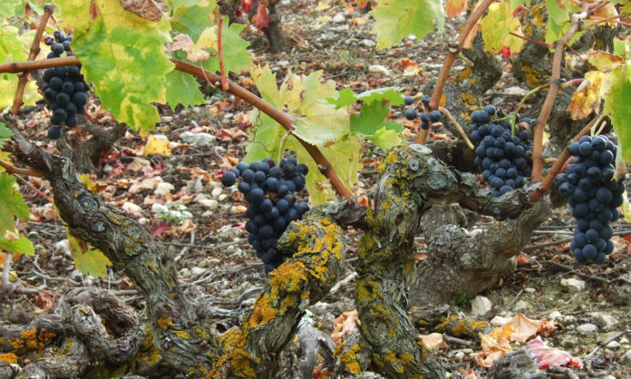 cambio climático vino de Rioja