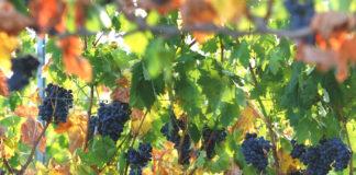 Cooperativas de Rioja