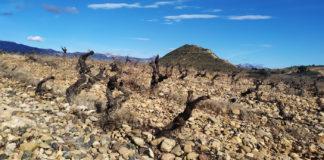 sostenibilidad en los 'suelos de terroir'