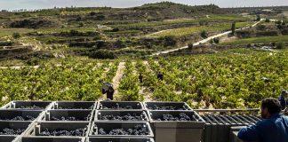 Rioja plan de actuación Covid-19