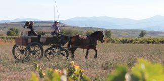 Enoturismo Bodegas Familiares de Rioja