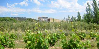 cubiertas vegetales en viñedo