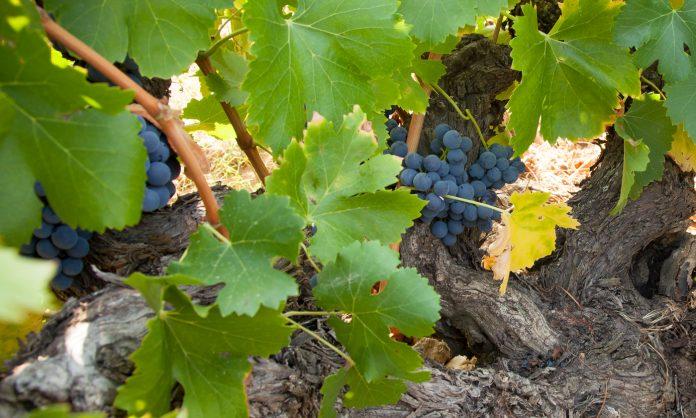 cambio climático en Rioja