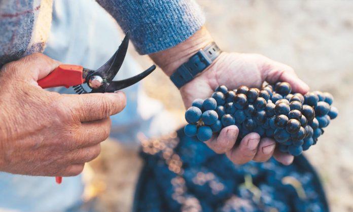 viticultores riojanos cuota consejo regulador