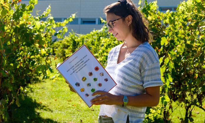 cubiertas vegetales viticultura sostenible