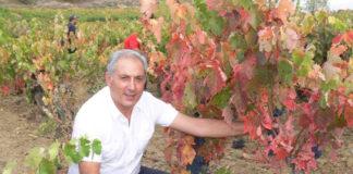 Juan Luis Cañas, propietario de la bodega, muestra una de las cepas de la variedad 'Benedicto', progenitora del Tempranillo, localizadas en sus viñedos.